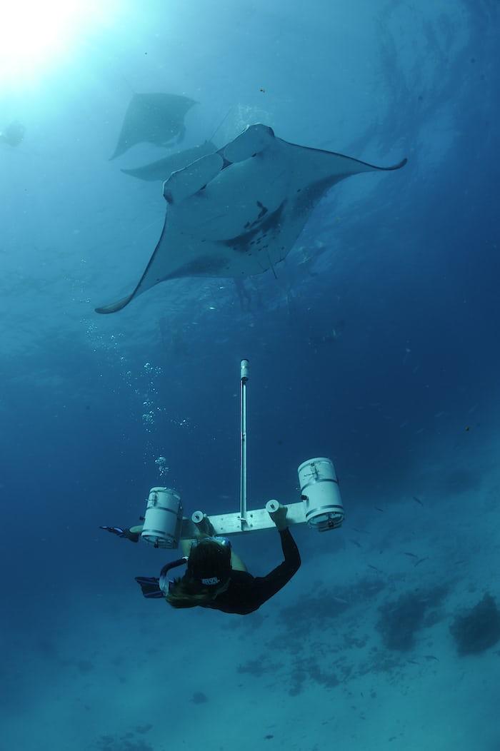 Researcher Using Stereo Camera to Measure Manta Rays, Hanifaru Bay, Baa Atoll, Maldives © Guy Stevens, Manta Trust 2012