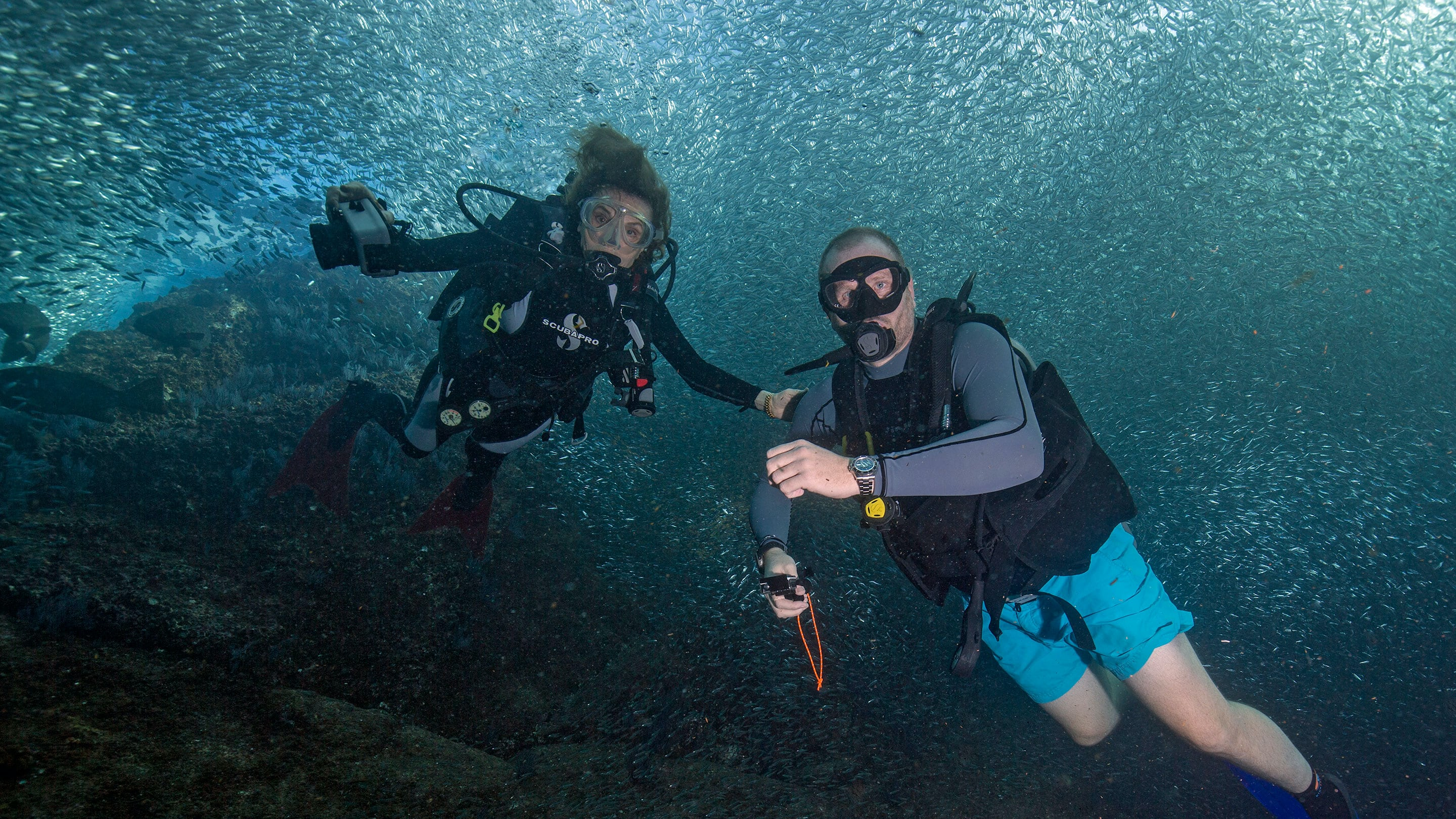 Dispatches Diving With Her Deepness Dr Sylvia Earle Hodinkee