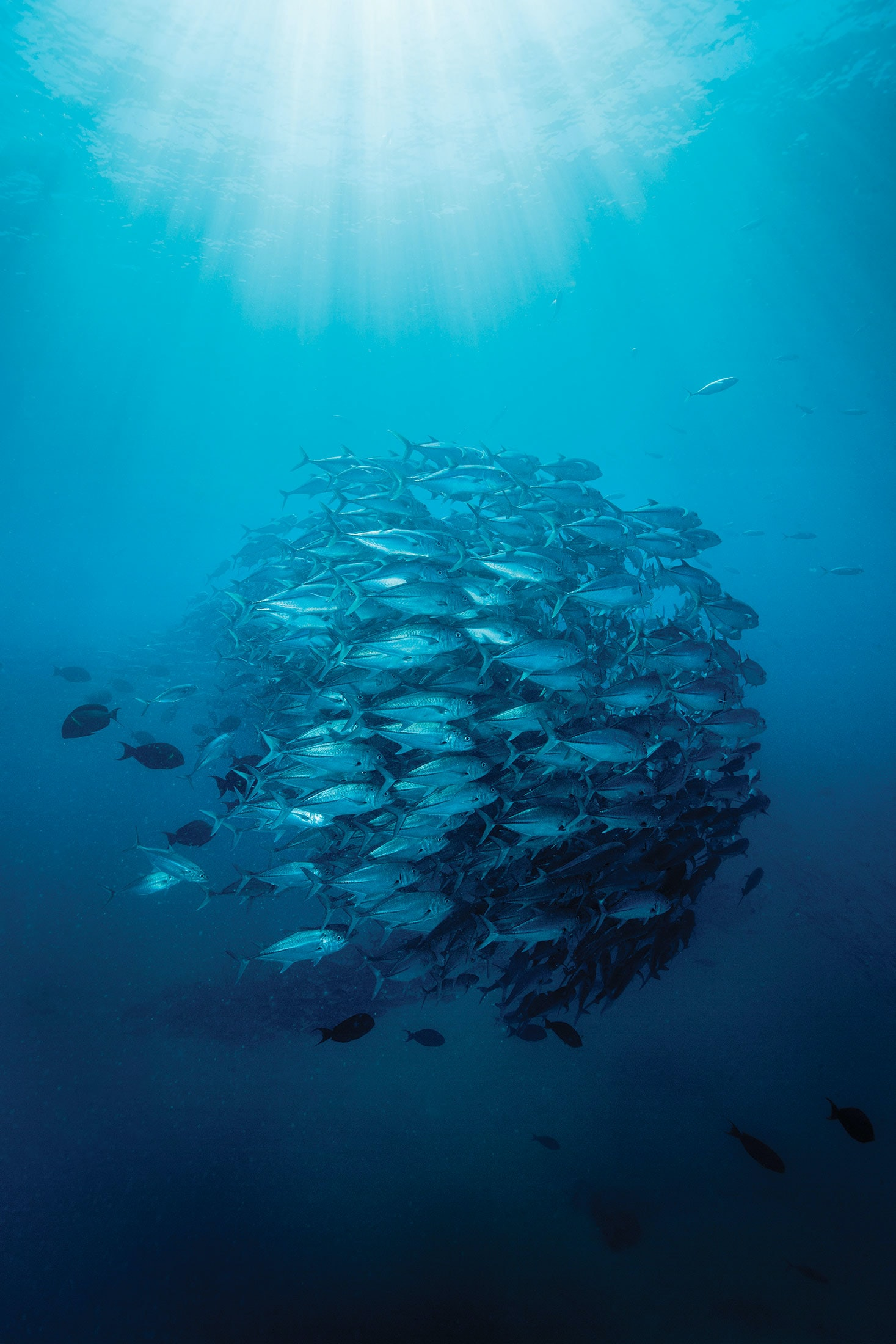 Dispatches: Diving With Her Deepness, Dr. Sylvia Earle school jacks