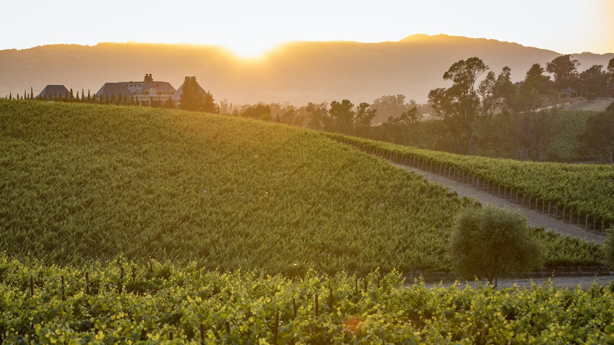 Weekend Round-Up: Thirty-Six Hours In Napa, Interviews With The Oldest Americans, And The Challenges Of Automotive UX cover