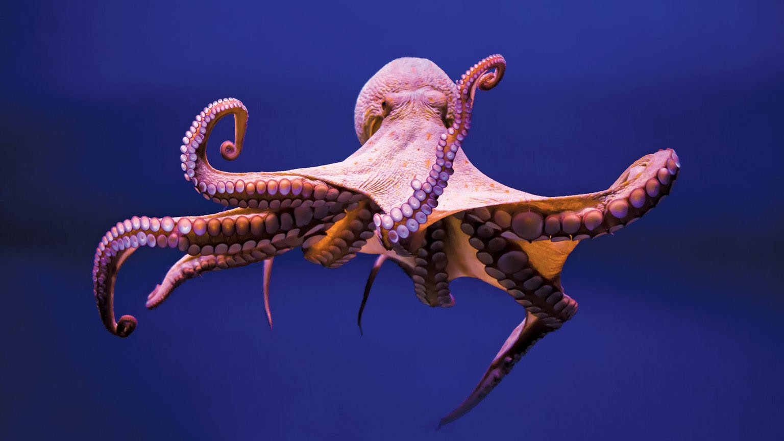 Weekend Round-Up: Smart Octopuses, A Lego Super Car, And Over-The-Top Sushi hero