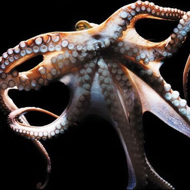 Weekend Round-Up: Smart Octopuses, A Lego Super Car, And Over-The-Top Sushi mind
